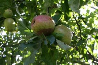 Sappig fruit 6